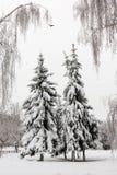 日霜1月天然公园多雪的结构树冬天 图库摄影