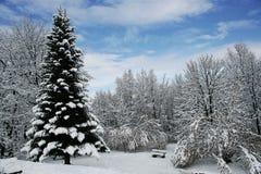 日霜1月天然公园多雪的结构树冬天 库存图片