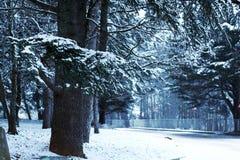 日霜1月天然公园多雪的结构树冬天 库存照片