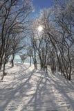 日霜1月天然公园多雪的结构树冬天 免版税库存图片