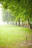 日晴朗公园的夏天 免版税库存图片