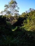 日晴朗森林的横向 免版税库存图片
