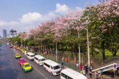 17日arpil 2016年,曼谷,开花桃红色树行,在公园a前面 库存照片