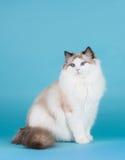 旧布玩偶猫 免版税图库摄影