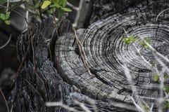 破旧的树桩 库存照片