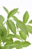 更旧的植物叶子 库存照片