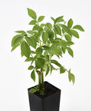 更旧的植物 免版税图库摄影