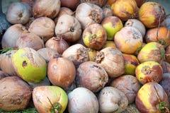 更旧的椰子 免版税图库摄影