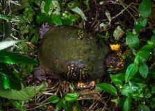 旧金山乌龟在公园 免版税库存照片
