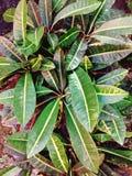 旧金山留给植物绿色红色 免版税图库摄影