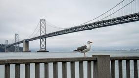 旧金山,加州- 2014年9月02日:由海湾桥梁的一只海鸥在旧金山 图库摄影