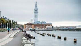 旧金山,加州- 2014年9月02日:由海的一只海鸥在码头14附近在旧金山 免版税库存照片