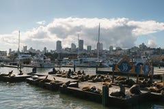旧金山-大约2017年11月:说谎在码头39的海狮在晴天 免版税图库摄影