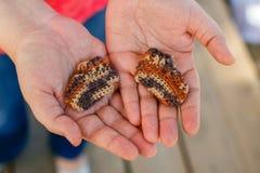 早产儿的被编织的袜子在手上 图库摄影