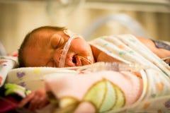 早产婴孩睡觉在孵养器的女婴 免版税库存图片