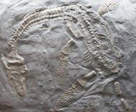 从早侏罗纪的游泳的海洋爬行动物 库存图片