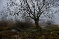 早冬天森林风景和河 库存照片