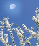 早午餐春天结构树 免版税库存图片