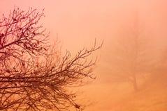 早午餐现出轮廓有有雾的秋天森林背景 库存图片