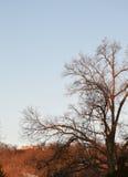 早日出Alpenglow橙色光在山的 免版税图库摄影