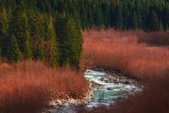 早春天场面在有河的森林里 库存图片