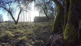 早春天日出在遗弃果树园,时间间隔4K 股票视频