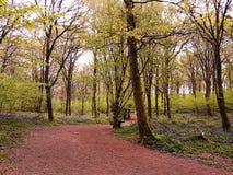早春天颜色在英国森林地 免版税图库摄影