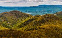 早春天颜色在蓝岭山脉在Shenandoah国家公园,弗吉尼亚。 免版税库存图片