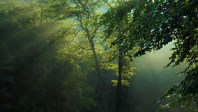 早晨与培养太阳射线的林木 股票视频