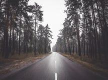 早晨乡下在森林公园树中的柏油路 在雾的旅途 旅行 免版税图库摄影