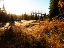 早晨光在森林里 库存图片