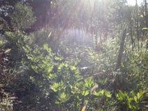 早晨光的植物 库存图片