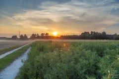早晨农村领域风景 豆清楚的域 图库摄影