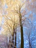 早晨冬天树 库存照片