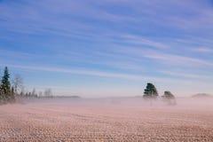 早晨冬天风景 雪树和冷淡的雾在领域 免版税库存图片