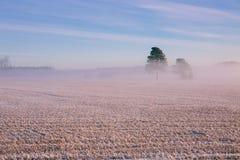 早晨冬天风景 雪树和冷淡的雾在领域 免版税库存照片