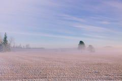 早晨冬天风景 雪树和冷淡的雾在领域 库存照片
