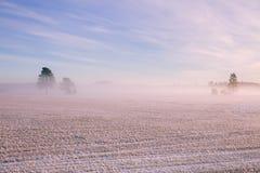 早晨冬天风景 雪树和冷淡的雾在领域 库存图片