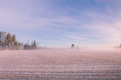 早晨冬天风景 雪树和冷淡的雾在领域 免版税图库摄影