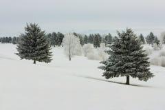 早晨冬天 库存图片