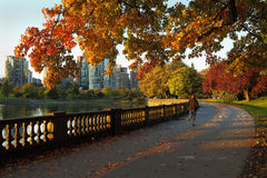 早晨凹凸部,史丹利公园,温哥华 免版税图库摄影