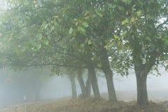 早晨在一个有雾的森林里,旅行在亚美尼亚附近 库存照片