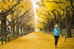 早晨在东京日本星期五, 2016年12月2日跑步在银杏树大道的东京居民在晚秋天,颜色变动 金前面  免版税库存图片
