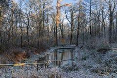 早晨在冬天公园 免版税库存照片