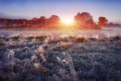 早晨在冷淡的草甸的秋天风景日出的 在草的树冰 免版税库存照片