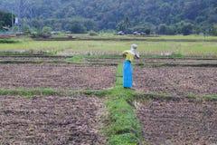 早晨在北泰国01 库存图片
