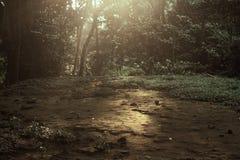 早晨在密林,猴子森林,巴厘岛发出光线 库存图片