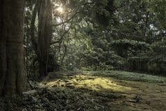 早晨在密林,猴子森林,巴厘岛发出光线 免版税库存图片
