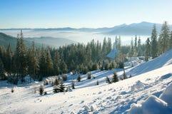 早晨在山的冬天风景,天空的雪森林 免版税图库摄影