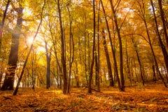 早晨在有阳光和光束的金子秋天公园-是 免版税库存图片